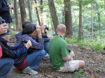 Looking for warblers at eye level
