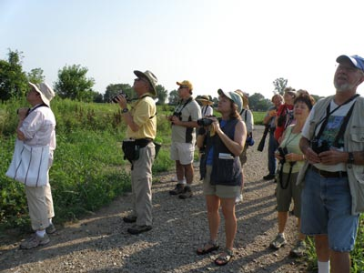 Looking for Dickcissels