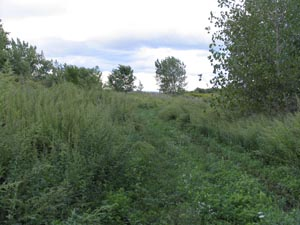 Wildlife habitat and vegetation at Dike 14 CFC