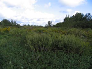 Field habitat at Dike 14 CFC